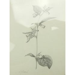 L. Jiřincová - Drawing of a...