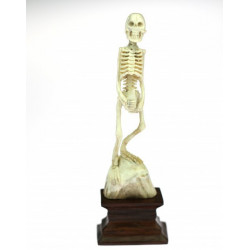 Skeleton with a bottle