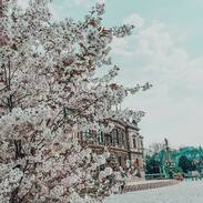 Krásný první květen a nezapomeňte se dnes políbit pod rozkvetlým stromem 🌸 😘  . . . . Beautiful first of May and don't forget to kiss today under the flowering tree 🌸 😘 . . . #goodmorning #hellomay #laskycas #antique #historie #prague #loveisintheair #blooming #heartbeat #prague #bluesky #rudolfinum