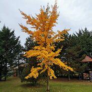 𝓟𝓸𝓭𝔃𝓲𝓶2020 . . . . . . #podzim2020 #podzim #listi #podzimnibarvy #praha #cinolterantiques #příroda #strom #podzimnizahrada #fotkukazdejden #🍂