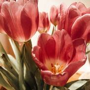 Přejeme Vám ze srdce hodně lásky 💗  . . . We wish you a lot of love 💗 . . #starozitnesperkyspribehem #hellofebruary #2021 #antique #historie #prague #slowfashion #cinolterantique #tulips #flowers #blizisevalentyn #starozitnosti #prsten #laskycas #goldsmith #heartbeat #prague #bemyvalentine  #valentinesday